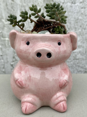 POTTED SUCCULENT, TINY PIG