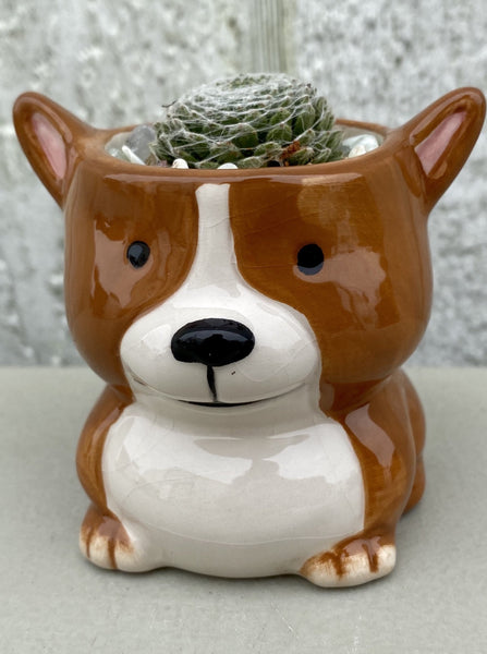 POTTED SUCCULENT, TINY DOG