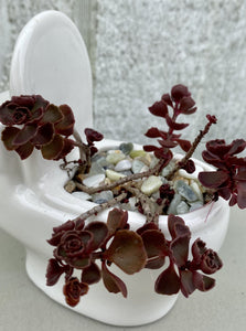 POTTED SUCCULENT, TOILET