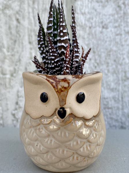 POTTED SUCCULENT, TINY BROWN OWL