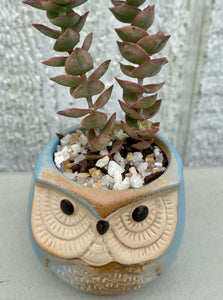 POTTED SUCCULENT, TINY BLUE OWL