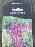 ASTILBE, VISION IN RED