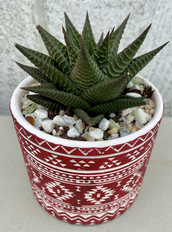 POTTED SUCCULENT, RED DESIGN