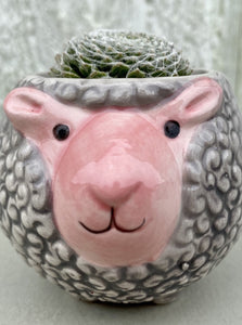 POTTED SUCCULENT, TINY SHEEP