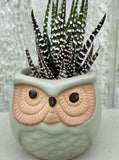 POTTED SUCCULENT, TINY GREEN OWL