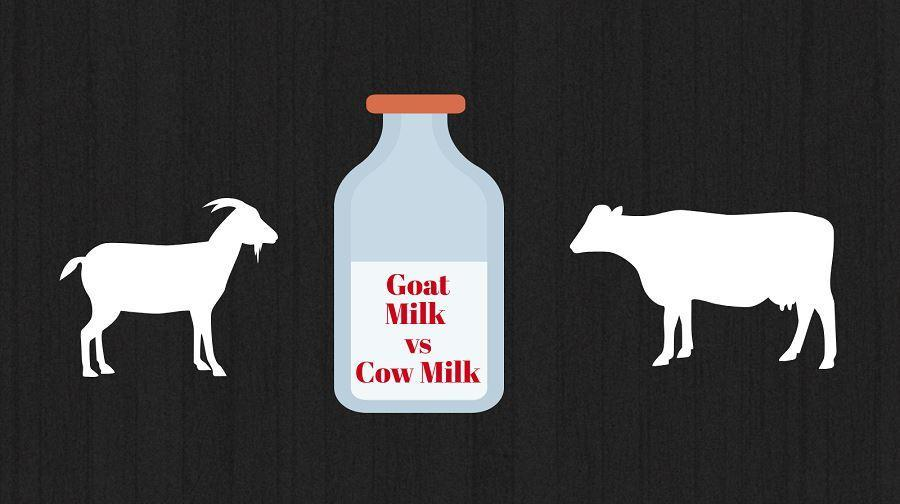 Difference between Goat Milk Formula and Cow Milk Formula