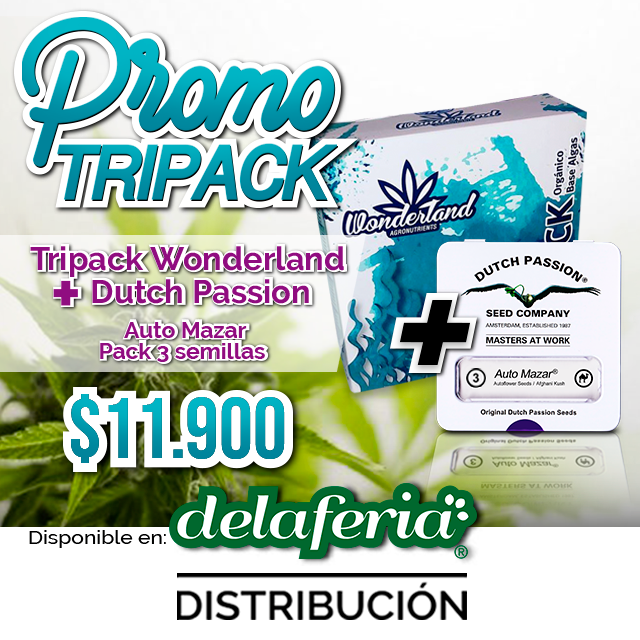 Tripack Organico Indoor/ Outdoor Wonderland + Auto Orange Bud 3 semillas