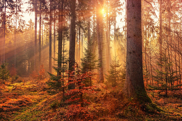 Forest in Autumn, Header Image for Frontline Essentials Collection