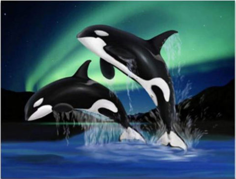 Dolphins Playing in Northern Lights - Cartoon and Animation Paint By Numbers