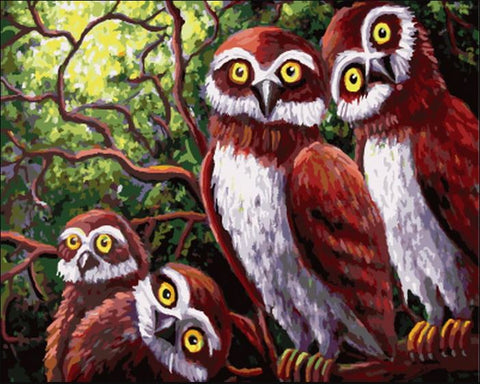 Owl Family - Birds Paint By Numbers