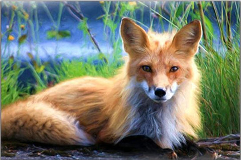 Blond Fox - Animals Paint By Numbers