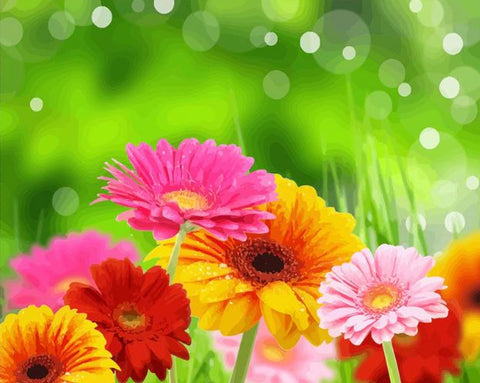 Colorful Flower Morning -  Flowers Paint By Numbers
