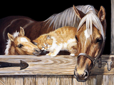 Abstract Horse and Cat - Animals Paint By Numbers