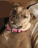 dog portrait paint by number
