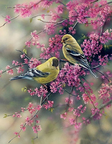 American Goldfinch - Birds Paint By Numbers