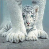 Cute Baby White Tiger - Animals Paint By Numbers