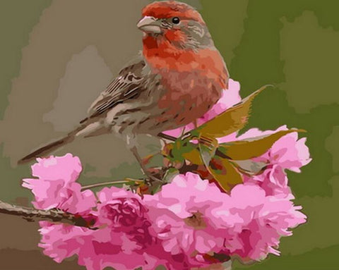 Finch Bird - Birds Paint By Numbers