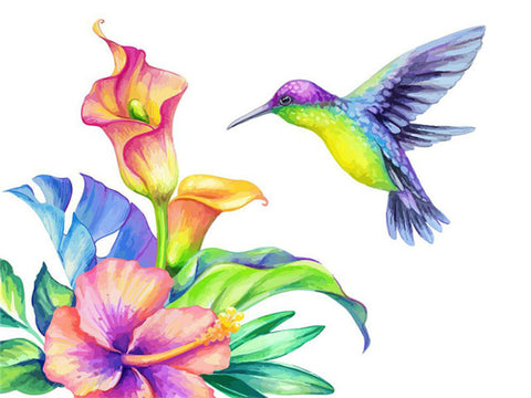 Colourful Humming Bird  - Birds Paint By Numbers