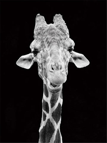 Giraffe Black And White- Animals Paint By Numbers