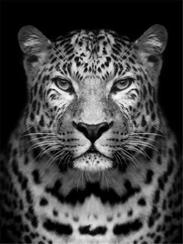 Leopard Black And White- Animals Paint By Numbers