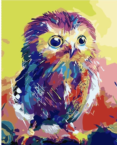 Chick Owl - Birds Paint By Numbers