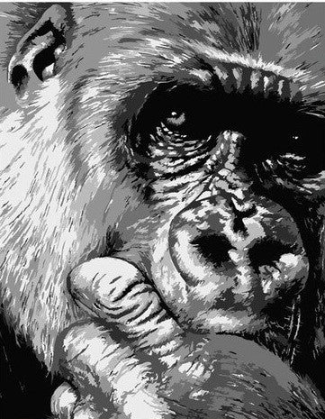 Black And White Chimpanzee - Animals Paint By Numbers