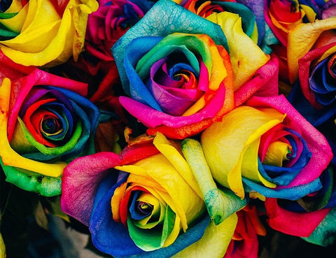 Colorful Roses -  Flowers Paint By Numbers