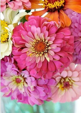 Collection of Zinnia Flowers -  Flowers Paint By Numbers