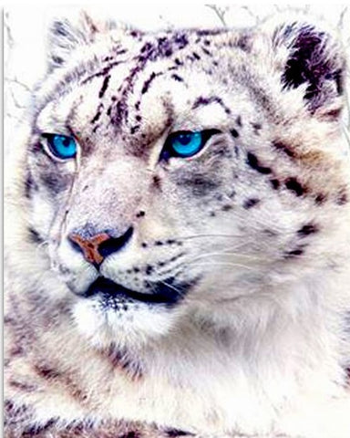Blue Eyes Tiger - Animals Paint By Numbers