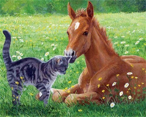 Cat and Horse in The Meadow- Animals Paint By Numbers
