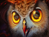 Owl Eyes - Birds Paint By Numbers