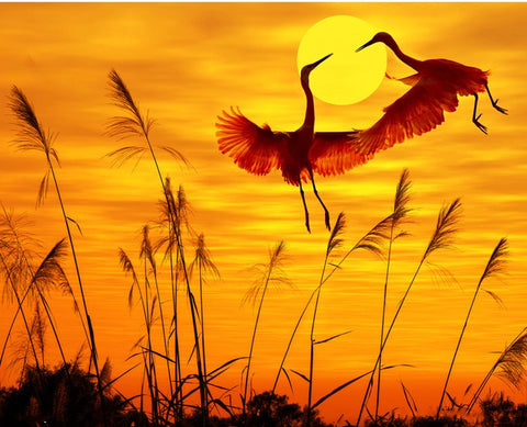 Cranes at Dawn- Birds Paint By Numbers