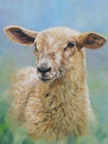 Cute Little Sheep- Animals Paint By Numbers