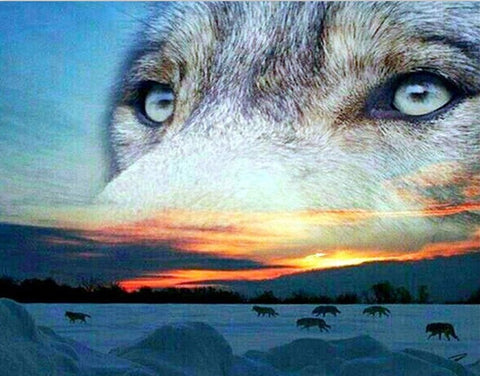 Siberian Wolves - Animals Paint By Numbers