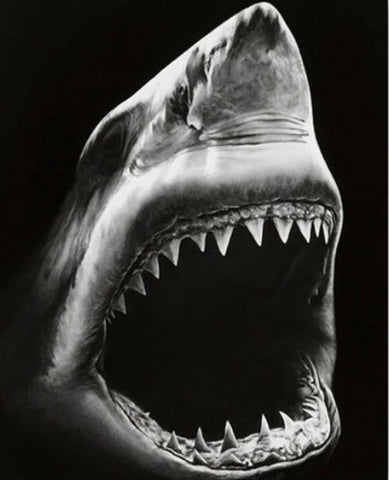 Black and White Shark - Animals Paint By Numbers