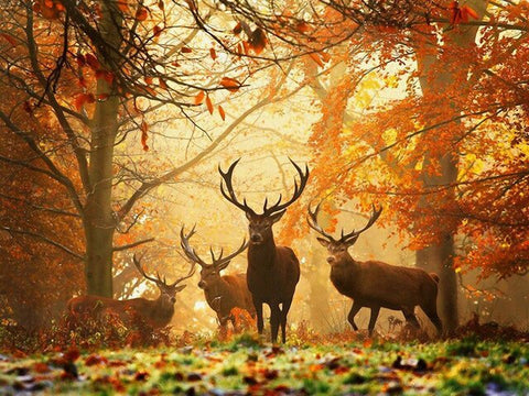 Deers in Autumn Forest- Animals Paint By Numbers