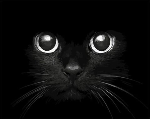 Big Eyes Cat - Animals Paint By Numbers