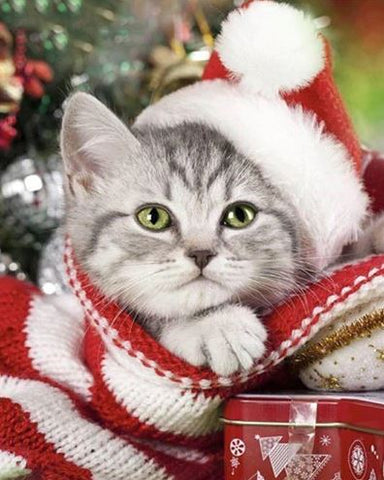 Christmas Kitten Cat- Animals Paint By Numbers