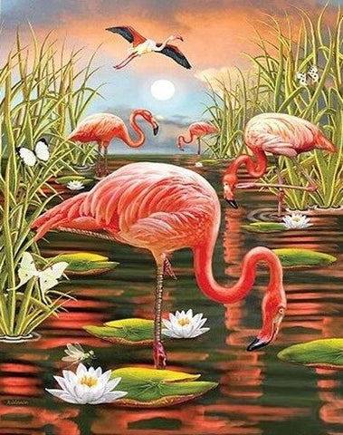 Flamingo in Swamp- Birds Paint By Numbers