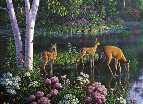 Deer Drink in Forest - Animals Paint By Numbers