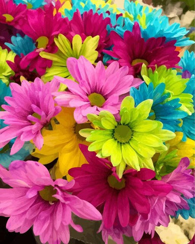 Colorful Daisies Flowers - Flowers Paint By Numbers