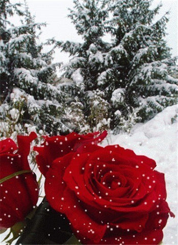 Beautiful Roses in Winter  - Flowers Paint By Numbers