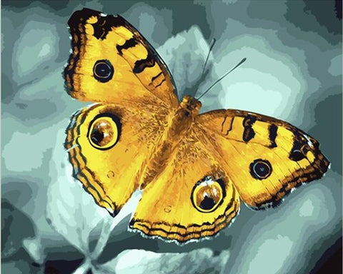 Yellow Butterfly - Animals Paint By Numbers