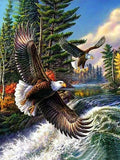 Wild Eagles- Birds Paint By Numbers