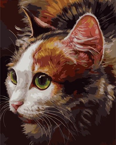Cool Cat- Animals Paint By Numbers
