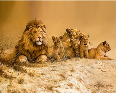 African Lion Family - Animals Paint By Numbers