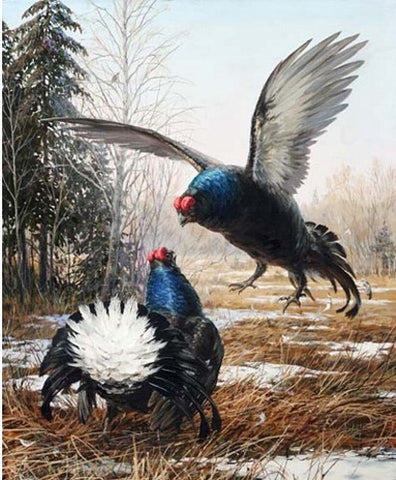 Black Grouse - Birds Paint By Numbers