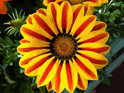 Big Yellow Flower- Flowers Paint By Numbers