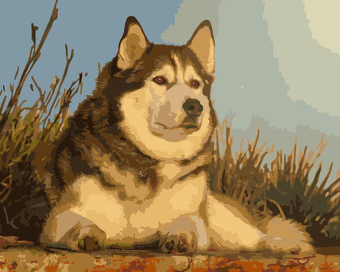 Dog Under The Sunset- Animals Paint By Numbers