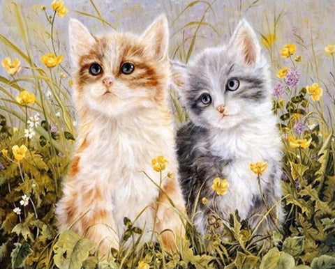 Couple Cute Cat - Animals Paint By Numbers